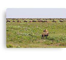 Hyena Buffet Canvas Print
