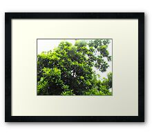 Sapodilla Tree Top Framed Print
