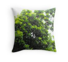 Sapodilla Tree Top Throw Pillow