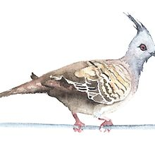 Crested Pigeon by Denise Faulkner