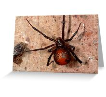 The infamous Aussie Redback Spider (1) Greeting Card