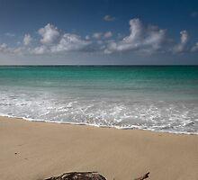 Beach Driftwood by Gormaymax