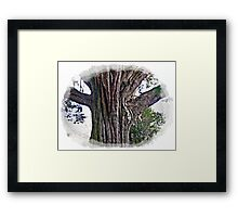 Sally & I really love nature, & looking at Trees is also a past time of mine. Framed Print