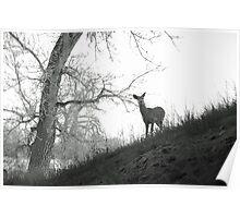 Cherry Creek Wilderness  Poster