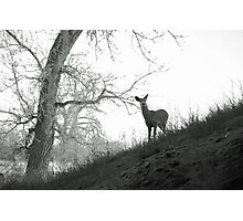 Cherry Creek Wilderness  Photographic Print
