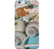 Shell Collection iPhone Case/Skin