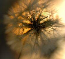 Make A Wish © Vicki Ferrari Photography by Vicki Ferrari