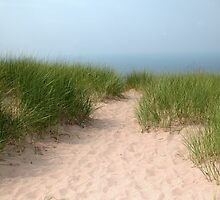 Pathway in the Sand by mnkreations