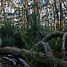Deep Creek Conservation Park by FASImages