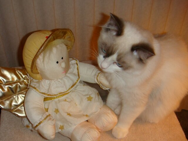 Lily-Rose & her Guardian Angel by Carol Clifford