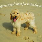 Sometimes Angels Have Fur by Patricia Elliott