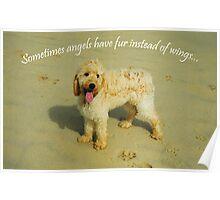 Sometimes Angels Have Fur Poster