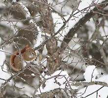 Winter Snack by Allison Millis