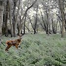 Fawn Among the Ferns by Wayne King