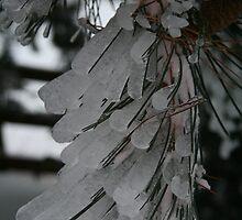 Frozen needles by NoahC