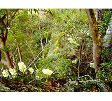 Orchids flowering in the forest Photographic Print