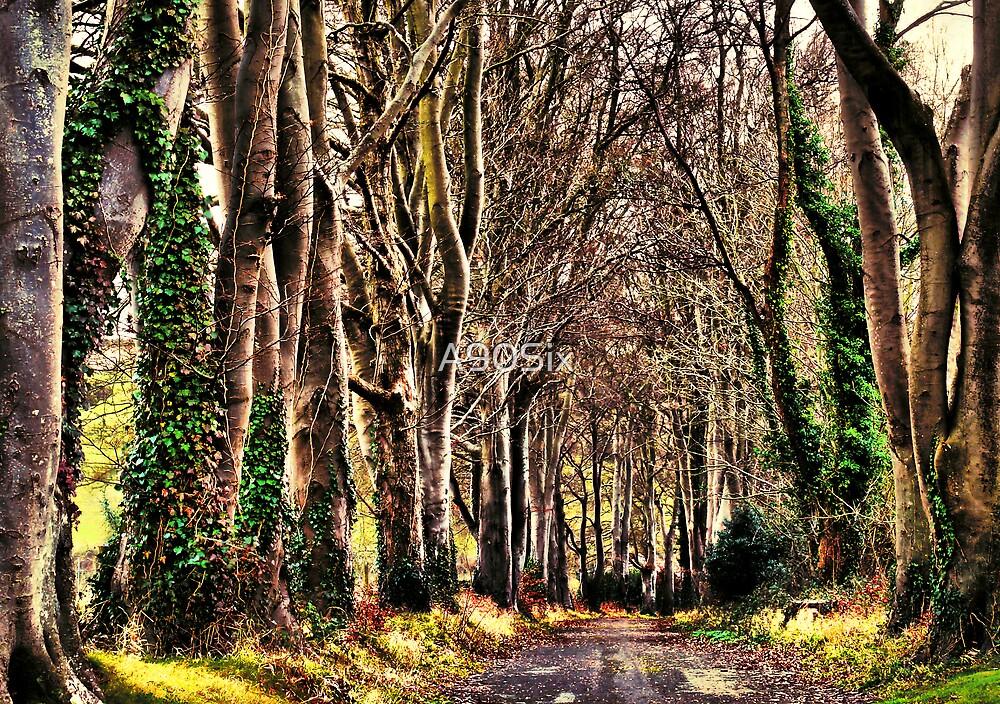 Beech Avenue by A90Six