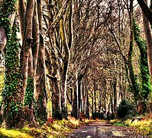 Beech Avenue by A90Six