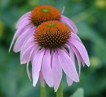 Flower by DeannaLyn