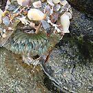 Sea Life by Garret