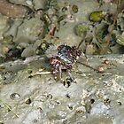 Crab by Garret