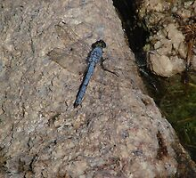 Blue Dragonfly by Garret