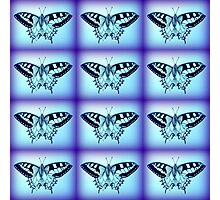 moths in blue Photographic Print