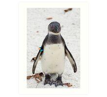 African penguin (Black-footed Penguin) Art Print