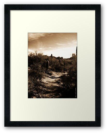 Desert Escape by Chelsea Brewer