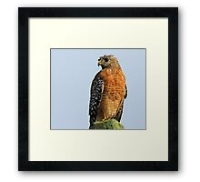 i will comb my hair if it eventually stops raining! Framed Print