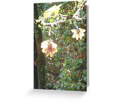 Autumn Sun  Rays #44 Greeting Card