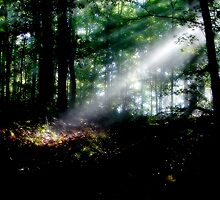 Rays In The Forest by Ron Alcorn