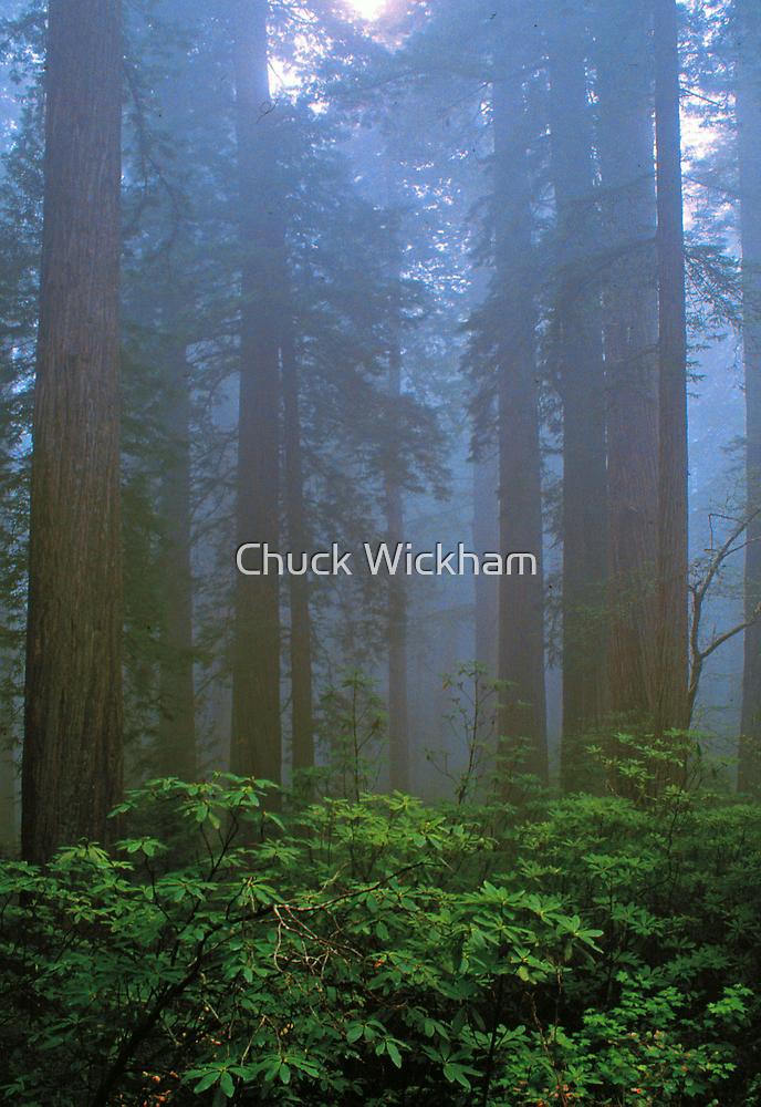 REDWOODS, FOG by Chuck Wickham