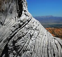 View of Bryce Canyon over Tree Trunk by TammyWinandArt