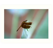 Dragonfly resting on a Heliconia species Art Print