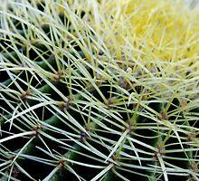cactus 3 by mariapar