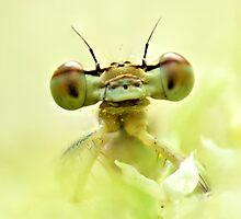 Dragon by stafoto