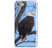 Bald Eagle in a Tree by Bridget Havercroft iPhone Case/Skin