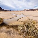 Water Tree in Death Valley Racetrack by Robert Kelch, M.D.