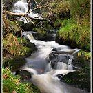 Waterfall and fallen tree by Shaun Whiteman