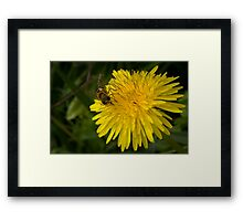 Golden nectar meal Framed Print