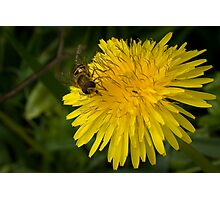 Golden nectar meal Photographic Print