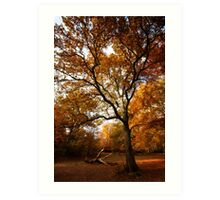 The beauty of Burnham Beeches Art Print