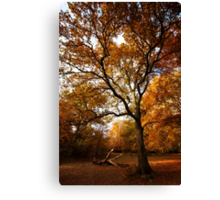 The beauty of Burnham Beeches Canvas Print