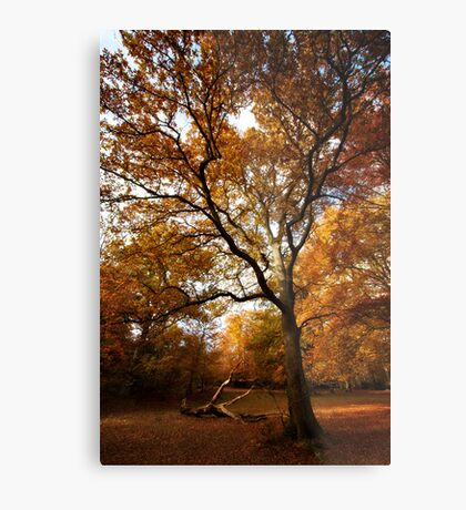 The beauty of Burnham Beeches Metal Print