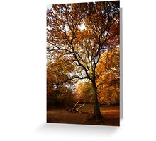 The beauty of Burnham Beeches Greeting Card