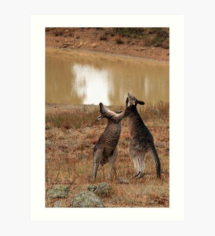 Boxing Kangaroos Art Print