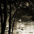 Swan on the River by Artberry