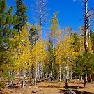Fall Colors - 7057 by BartElder