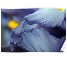 Depth of the Iris Poster